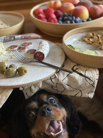 charcuterie and a cute pup!