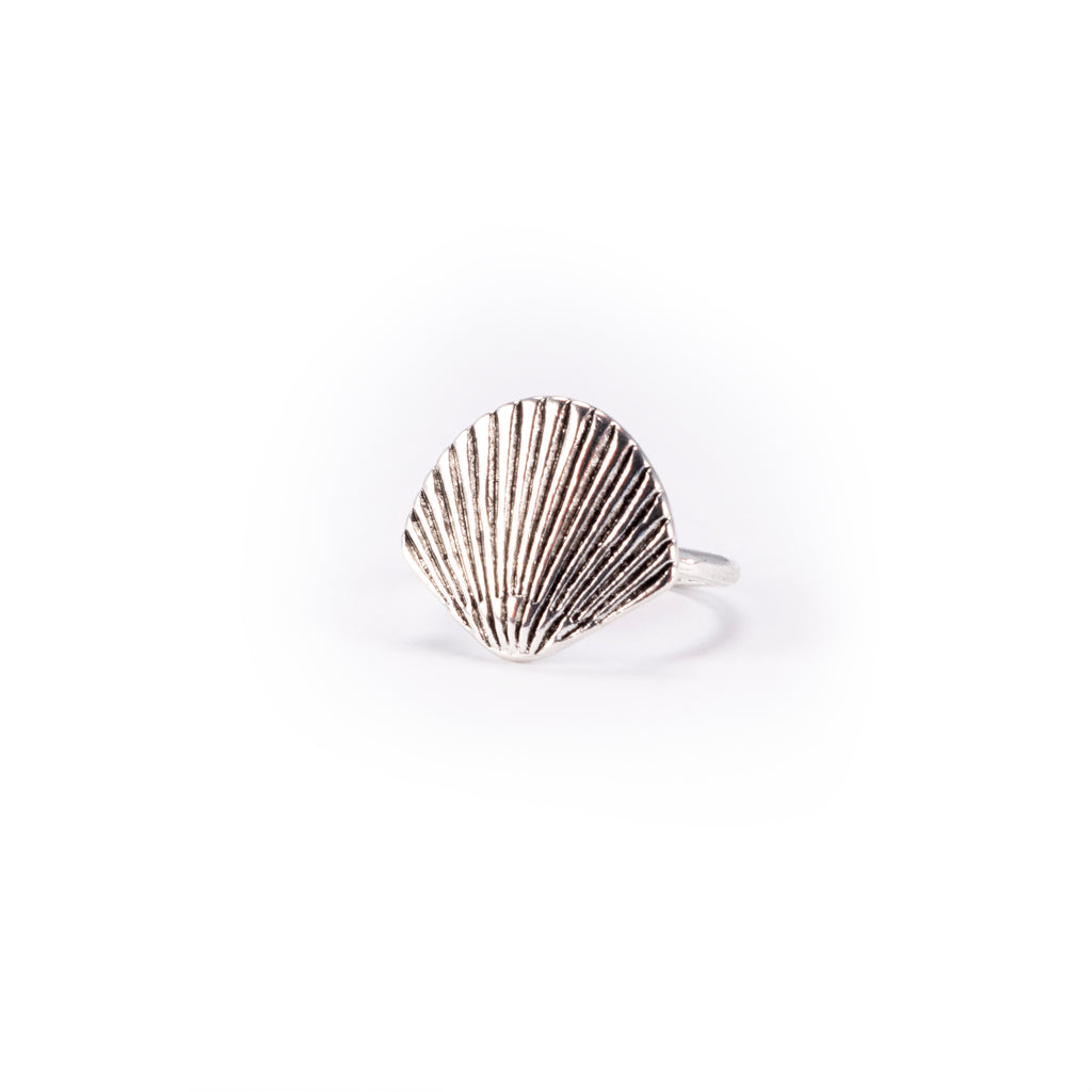 Scallop Shell - Small