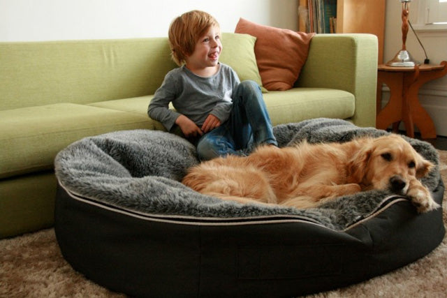 Boy Vs Dog Battle Of The Bean Bag Bed Ambient Lounge