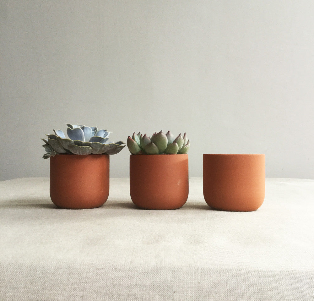 Small terracotta plant pot for succulent or cactus by Sue Pryke on Oates & Co.