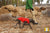 Quinzee Red - warm insulated dog jacket