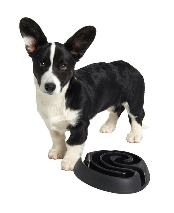 Buster Dog Maze Slow Feeder Bowl (Black)