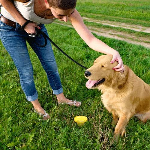 Simple Solution Pee Post® Outdoor Dog Training Aid