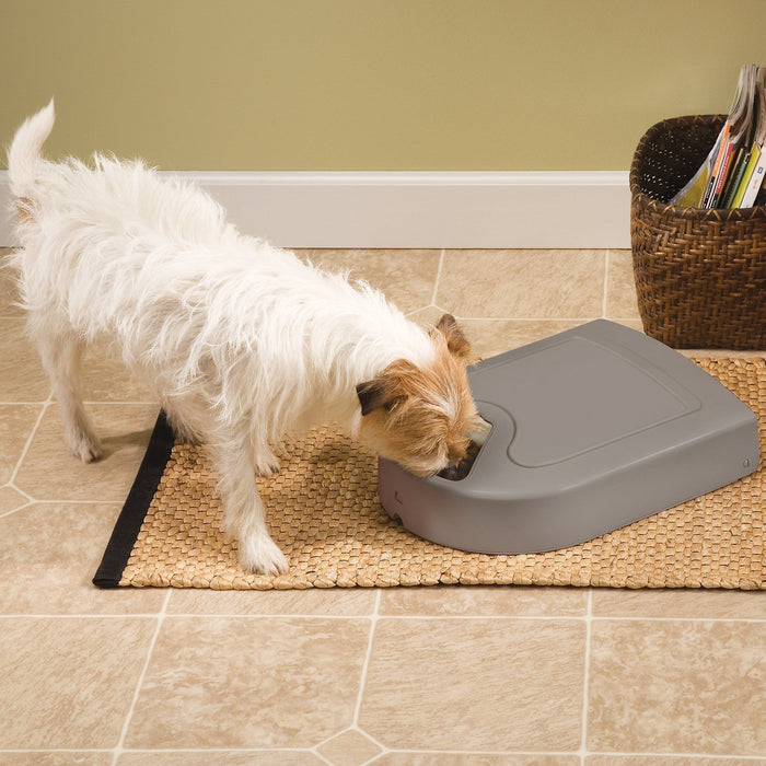 Digital 5-Meal Automatic Pet Feeder