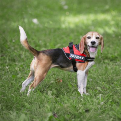 IDC® Power Harness (Red)