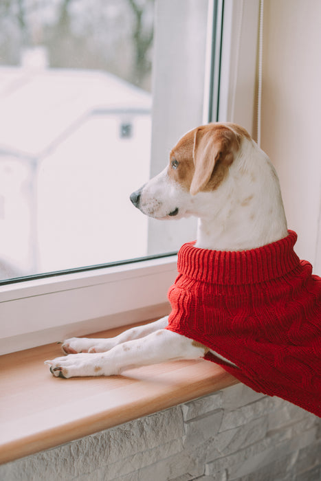 Aspen Dog Sweater (Red)