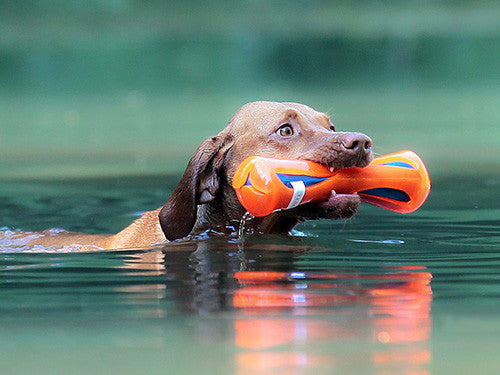 Chuckit! Hydrosqueez Bumper Dog Toy