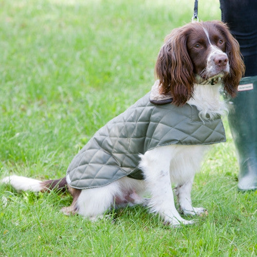 Quilted Dog Coat (Olive)