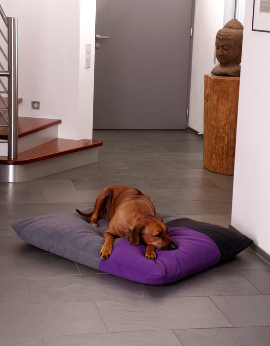 Divan Quattro Dog Bed (Grey/Graphite/Violet)