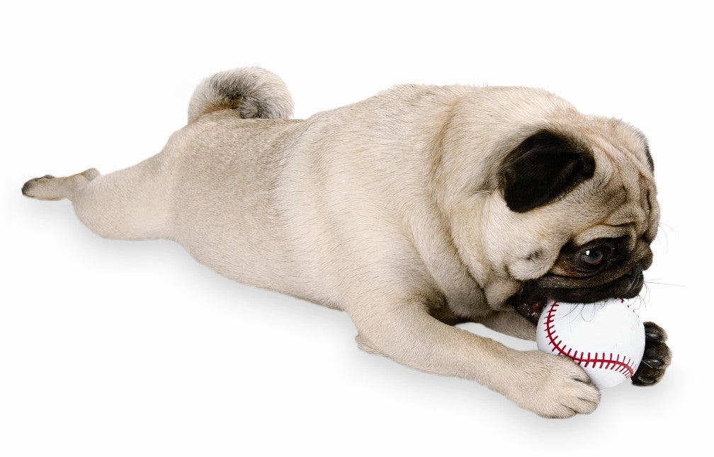 Orbee-Tuff® Sport Baseball Dog Toy
