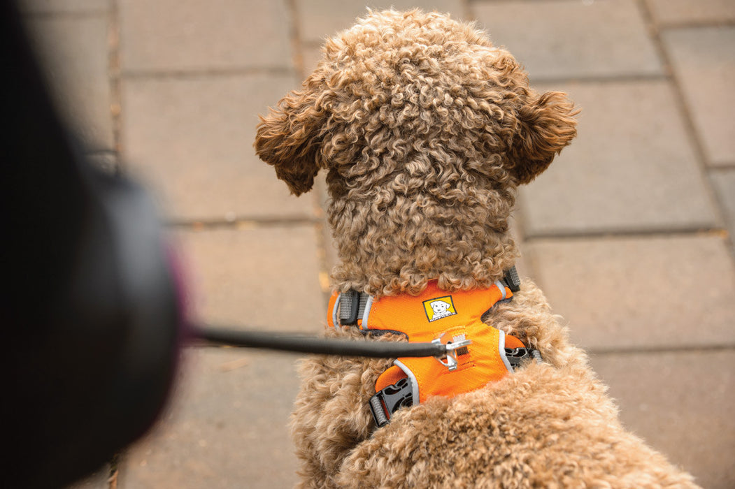 Front Range™ Dog Harness (Campfire Orange)