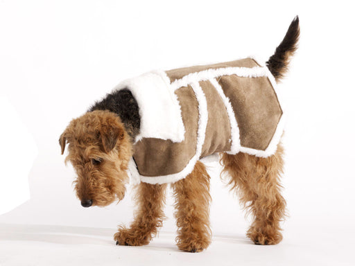 Sherpa Leather Dog Coat (Brown)
