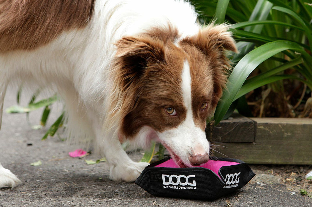 Foldable Travel Pet Bowl (Pink)