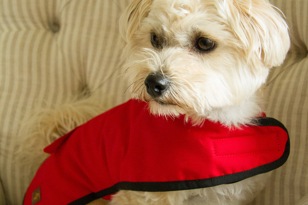Dog Coat (Red Waxed cotton)