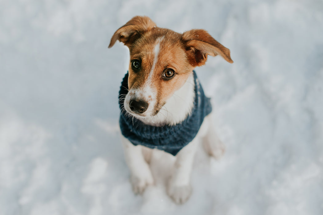 Aspen Dog Sweater (Snowflake Embroidery)