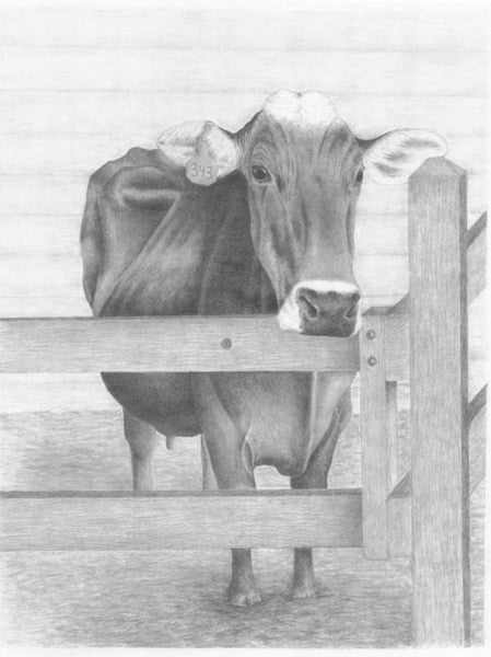Curiosity - Cow Art and More