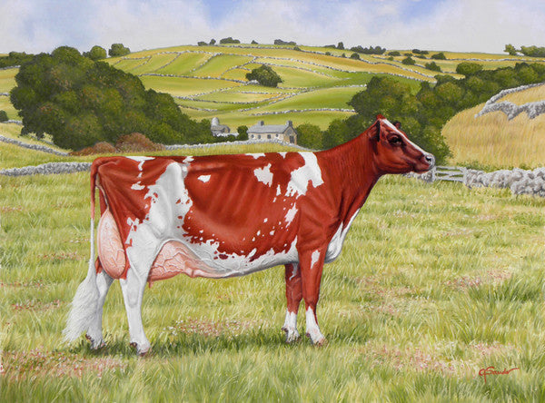 Something in the Ayr - Cow Art and More