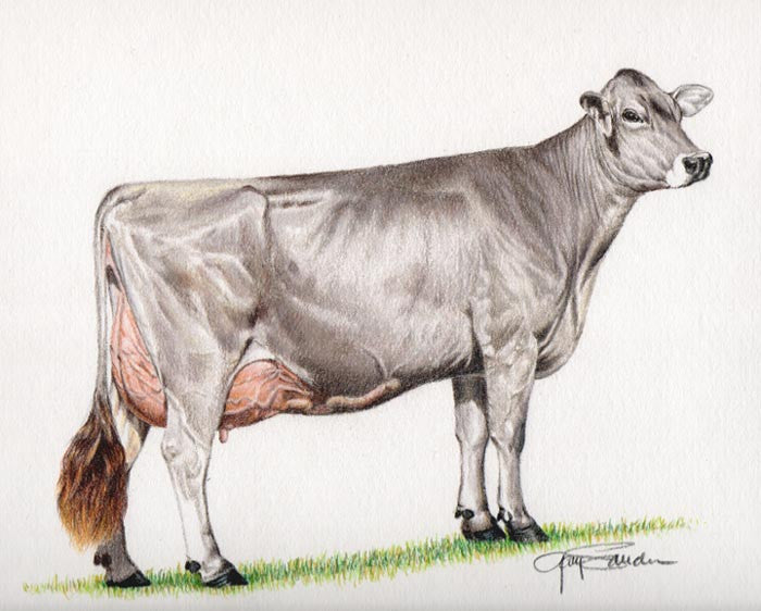 Ideal Brown Swiss cow - Cow Art and More