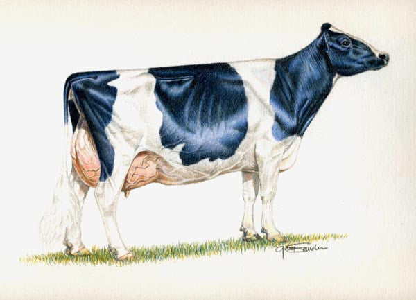 Ideal Holstein cow - Cow Art and More