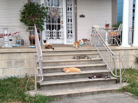 front-porch-cats