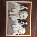 Puppy Dog Greetings Card