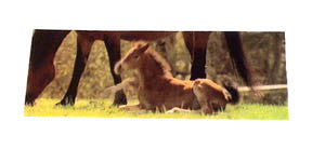 Flicker Foal Moving Picture Ruler/Bookmark