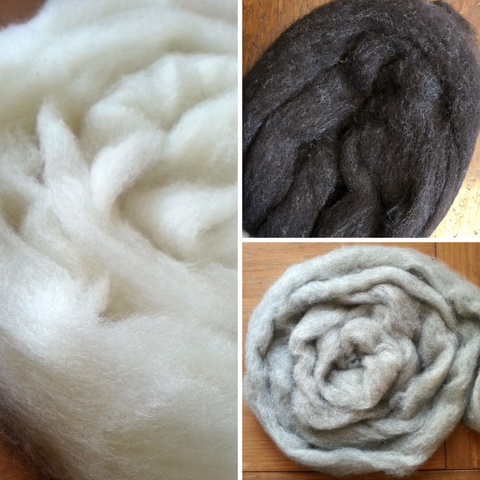 Corriedale Roving, Colorado-Grown Natural Colors, 4 oz.