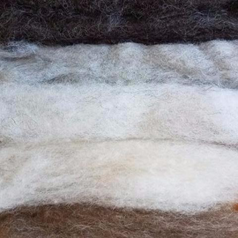 Shetland Wool Roving, Homegrown Natural Colors 4 oz.