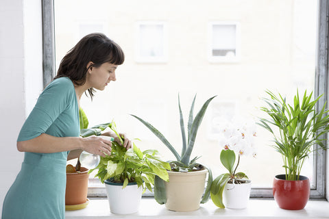 indoor plants care and tips