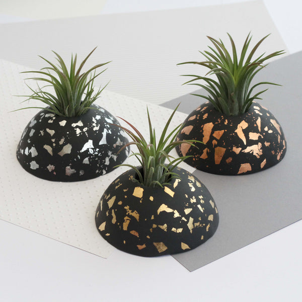 Air Plant holder display dome - Metallic Silver