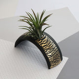 Air Plant holder display arch - Metallic Gold