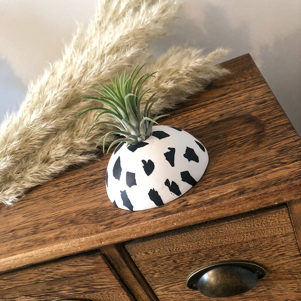 Dalmation print air plant holder display dome