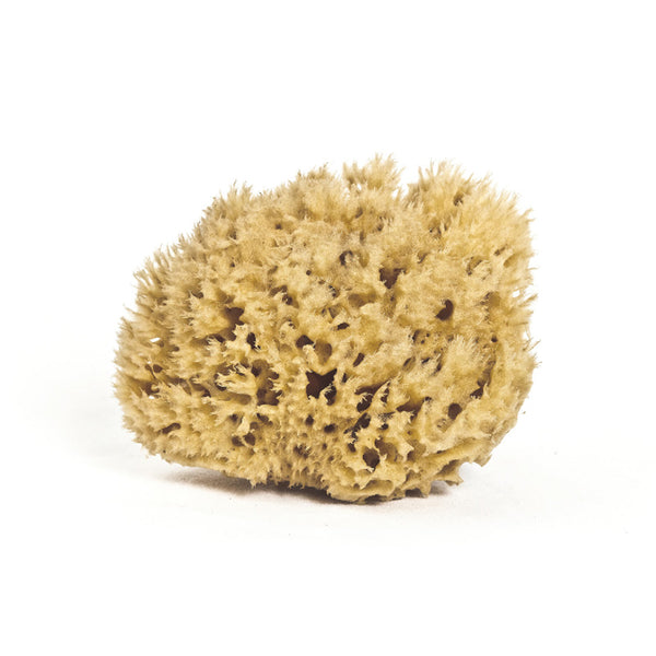 Meeka - Honeycomb Body Sea Sponge