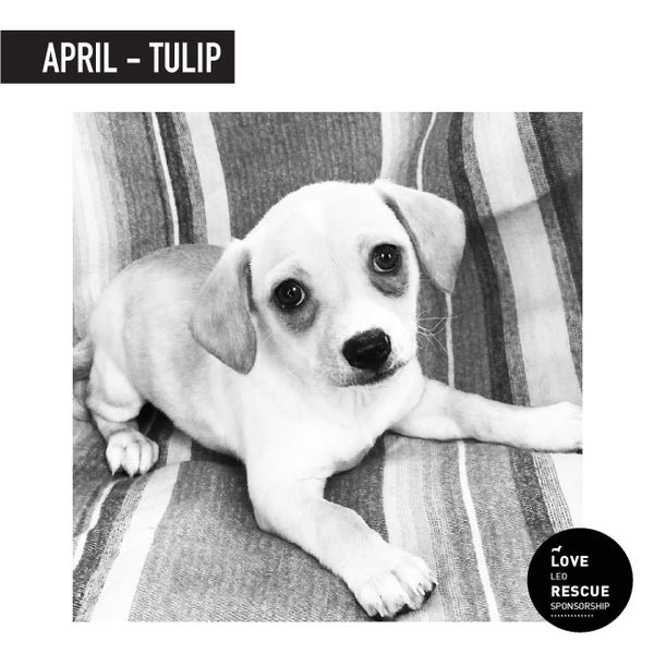April Shelter Dog Sponsorship: Meet Tulip