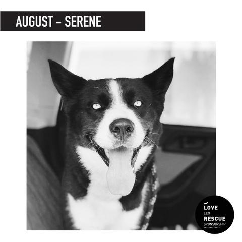 August Shelter Dog Sponsorship: Meet Serene