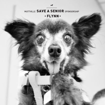 May Save a Senior Sponsorship: Meet Flynn