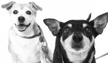 September Save a Senior Sponsorship: Meet Joni + Chachi