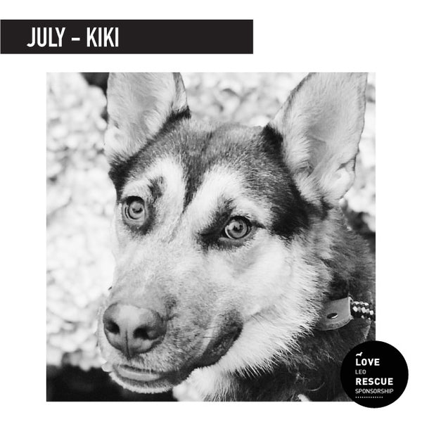July Shelter Dog Sponsorship: Meet KiKi