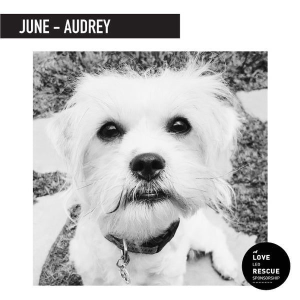 June Shelter Dog Sponsorship: Meet Audrey