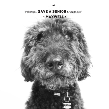 June Save a Senior Sponsorship: Meet Maxwell