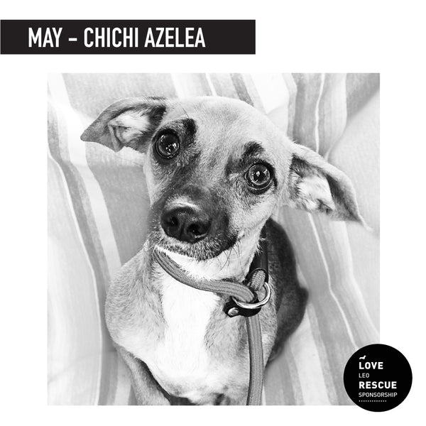 May Shelter Dog Sponsorship: Meet Chichi Azelea