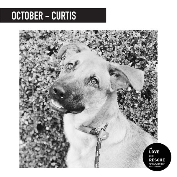 October Shelter Dog Sponsorship: Meet Curtis