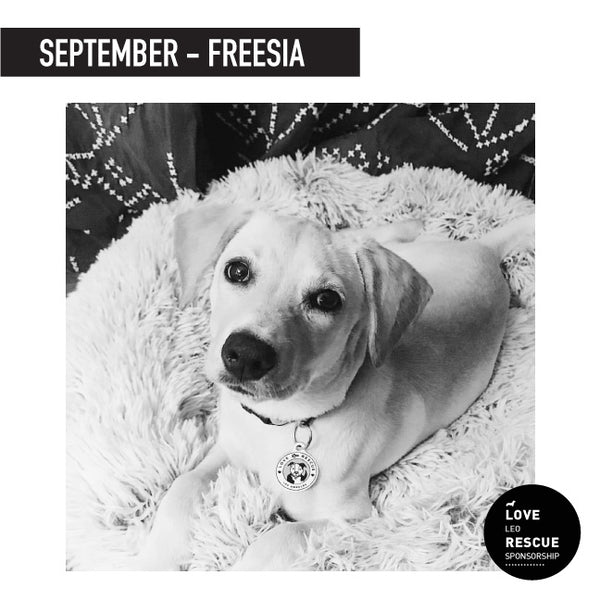 September Shelter Dog Sponsorship: Meet Freesia