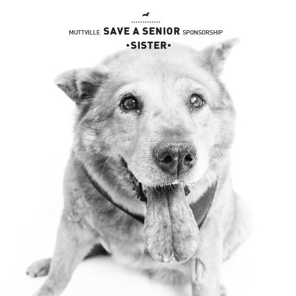 July Save a Senior Sponsorship: Meet Sister