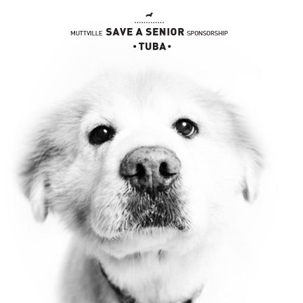 November Save a Senior Sponsorship: Meet Tuba