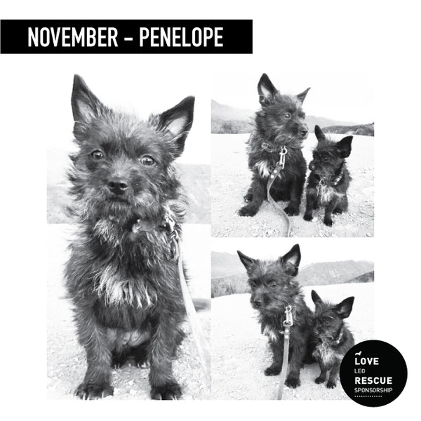 Animal Rescue - Novembers Sponsorship: Peneleope