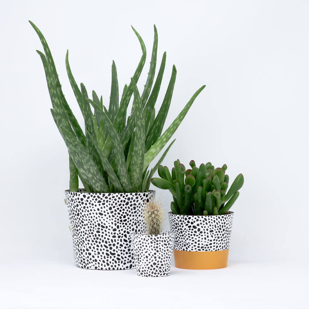 'Spores' plant pot covers.