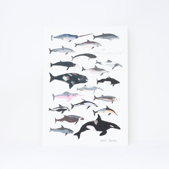 Signed 'Cetaceans' print by James Barker.