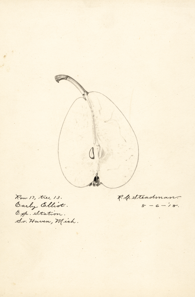 Pears, Early Elliot (1918)