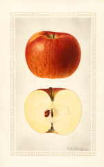 Apples, Willow (1925)